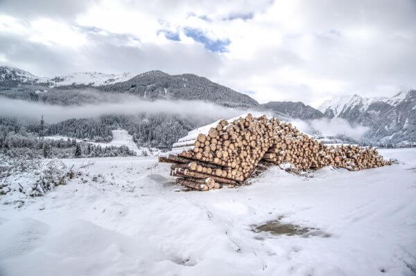 Stacke dpile of wood photo
