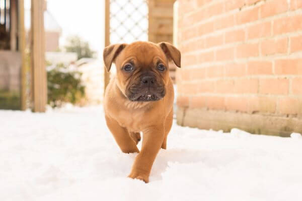 Puppy in the snow photo
