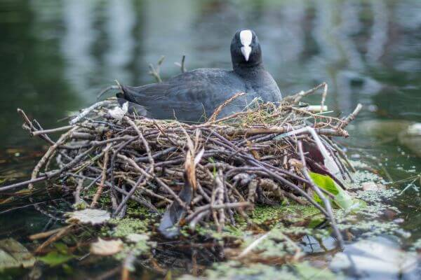 Sitting on her nest photo