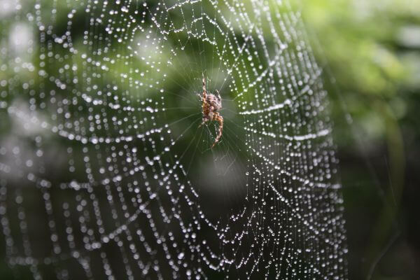 Spider in a web photo
