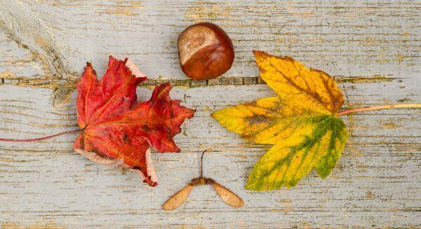Autumn display photo