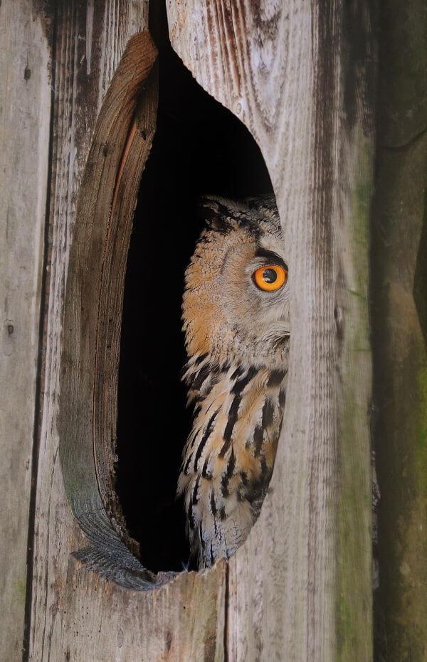 Curious owl photo