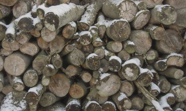 Logs in the winter photo