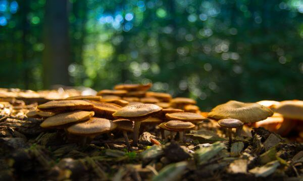 Mushrooms in the forest photo