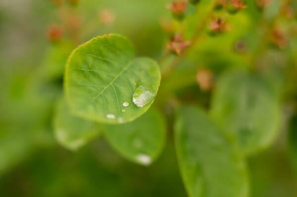 Drop of rain on leaf photo