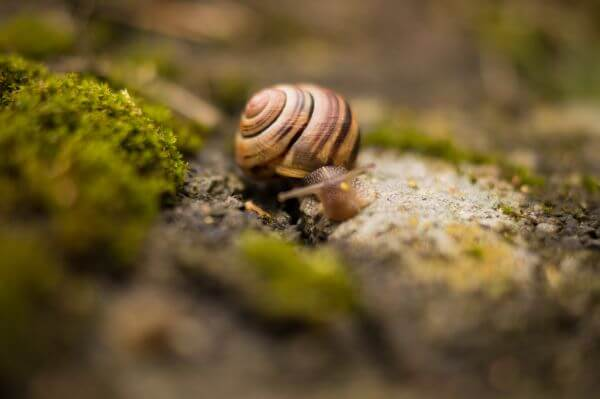 Snail with house photo