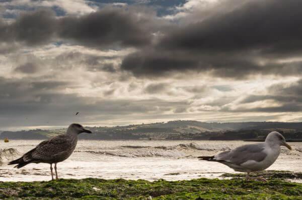 Seagulls at the beach photo