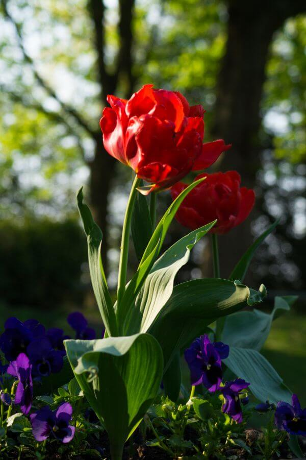 Flowers in the sun photo