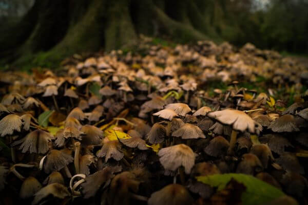 Field of mushrooms photo