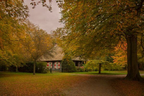 Little house in the forrest photo