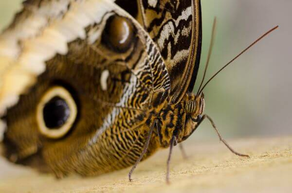 Butterfly close up photo