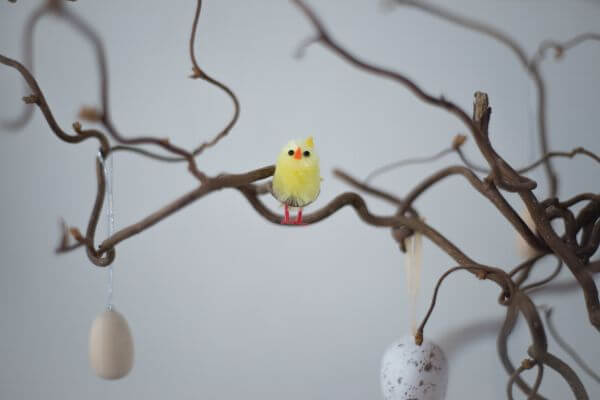 Easter bird on a branch photo
