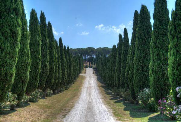 Tuscan driveway photo