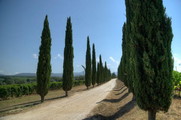 Tuscan road photo