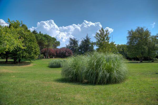 Park in Volterra photo