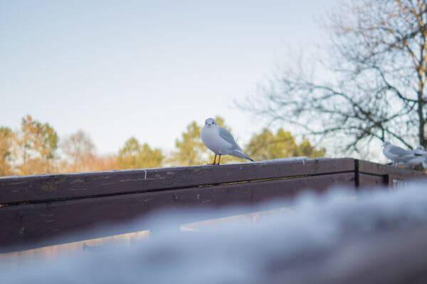 Freezing bird photo
