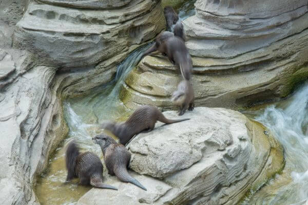 Otters on the move photo