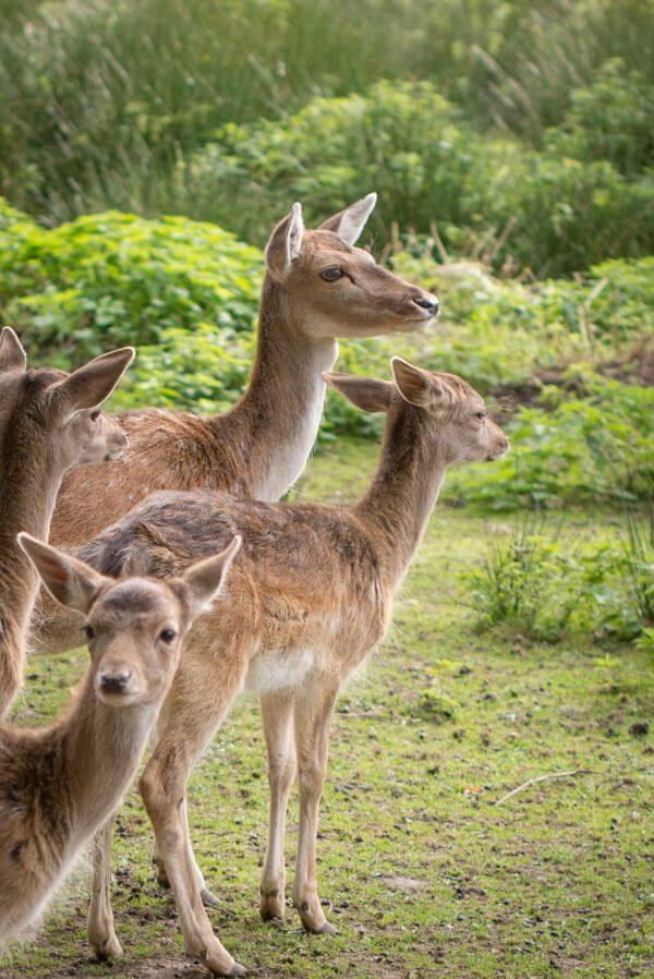 Dearest deer photo