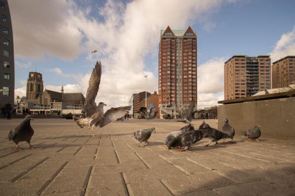 Seagull break dancing photo
