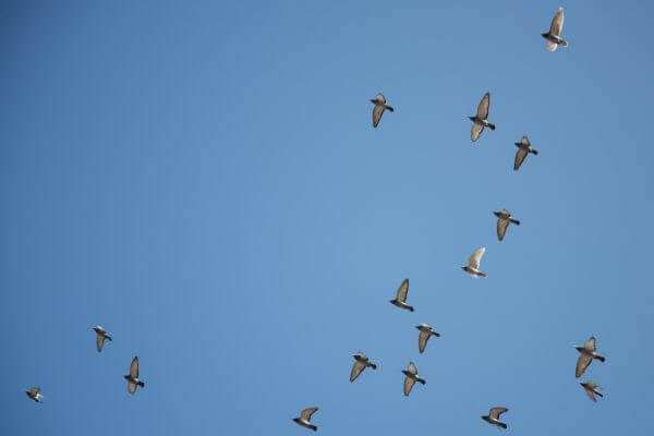 Birds flying high photo