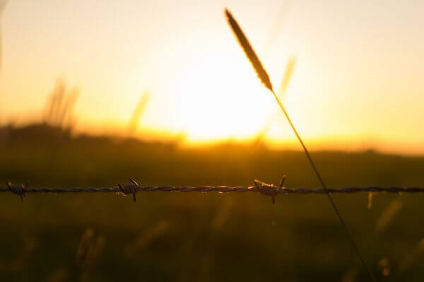 Sunny barbed wire photo