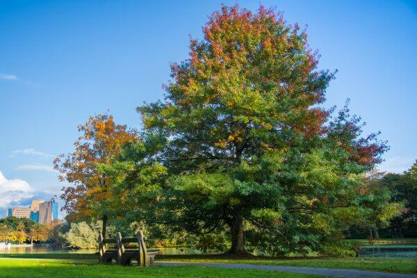 Autumn tree in the park photo