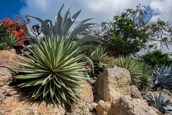 Rock plants photo