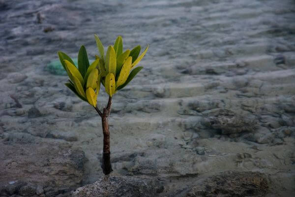 Coastal baby tree photo