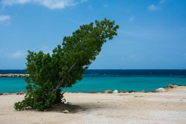 Tree at a beach photo
