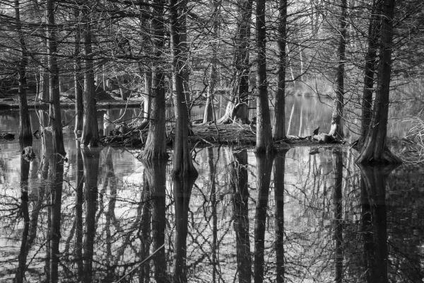 Trees reflecting in the water photo