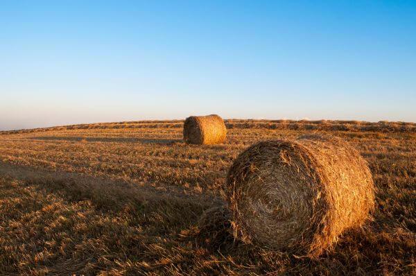 Rolls of hay photo