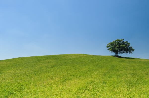 Lonely tree on a green hill photo