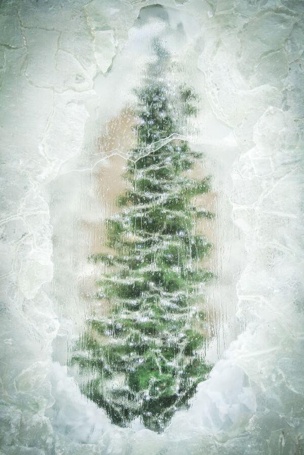 Frozen Christmas Tree photo