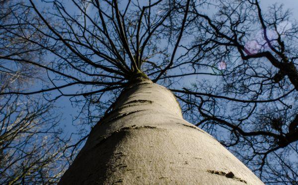 Winter tree crown photo