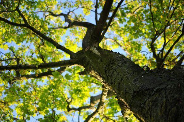 Green tree crown photo