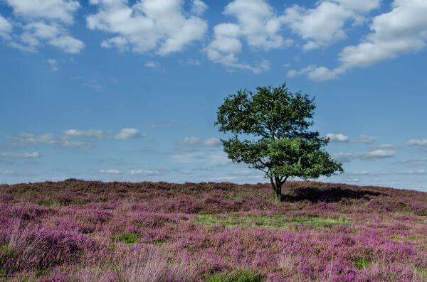Purple moorland photo