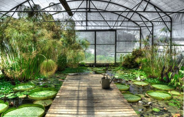 Lotus greenhouse photo
