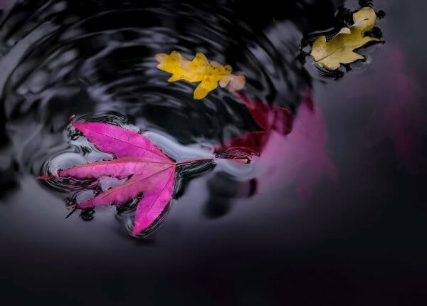 Floating leaves photo