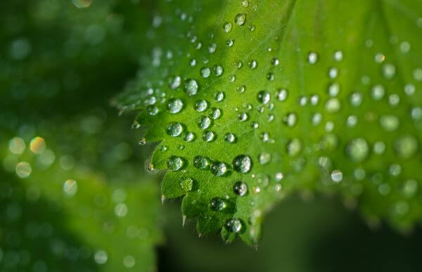 Water drops on leafs photo
