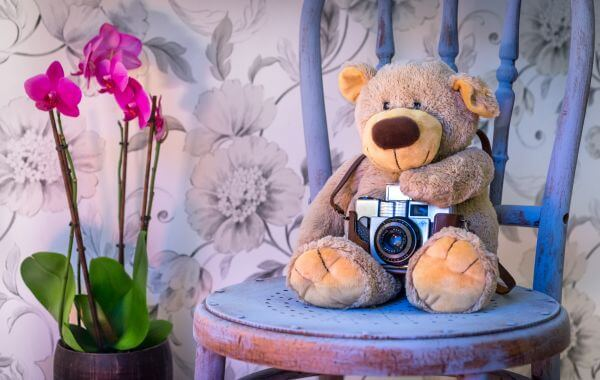 Teddy takes a picture photo