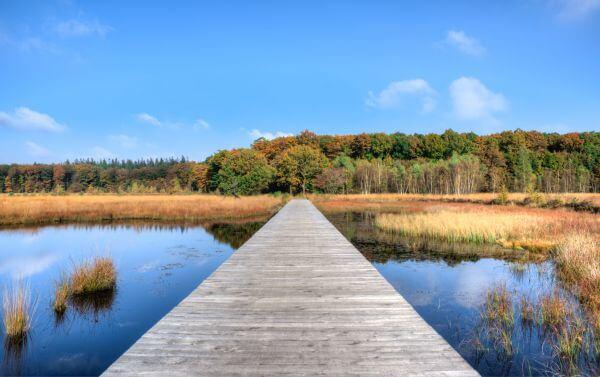 Fall in Drenthe photo