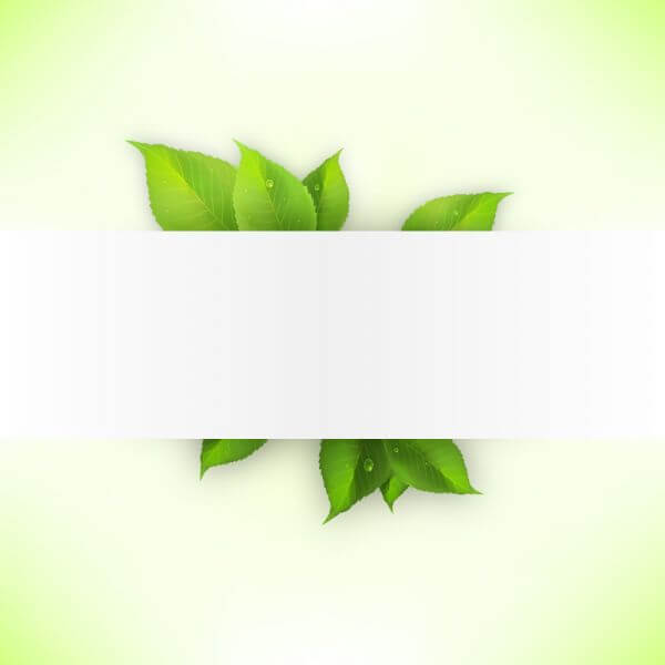 Realistic green leaves banner vector