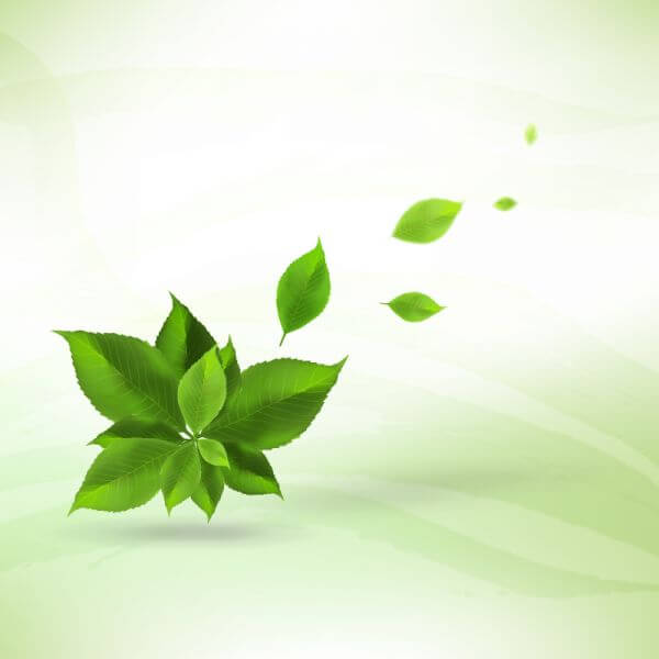 Realistic leaves background vector
