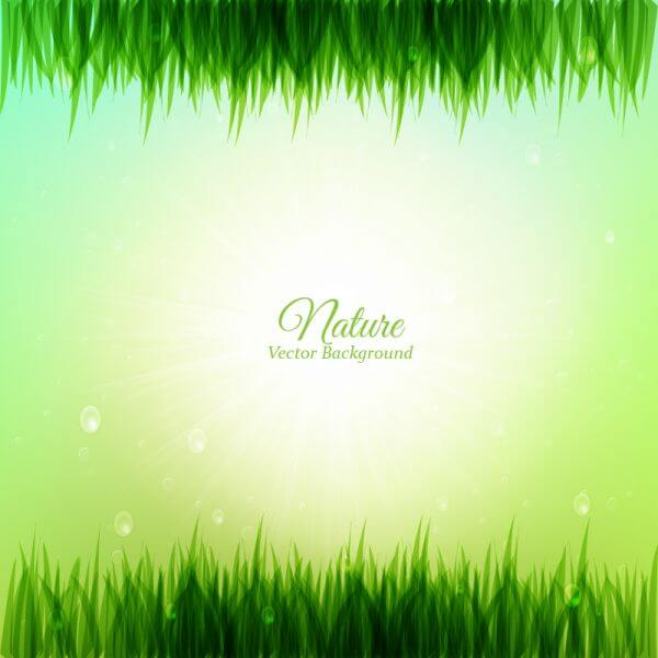 Grass illustration vector