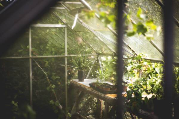 Greenhouse photo