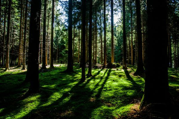 Forest photo