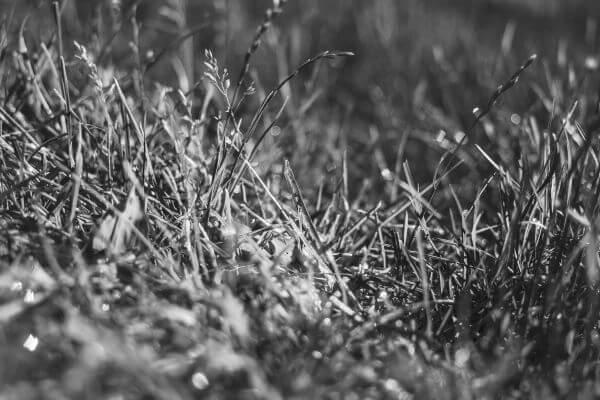 Grass photo