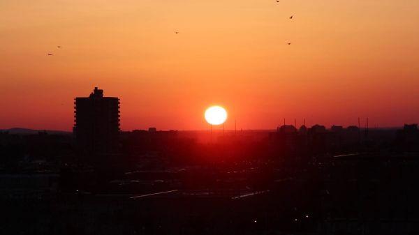 Flying Birds in Sunset video