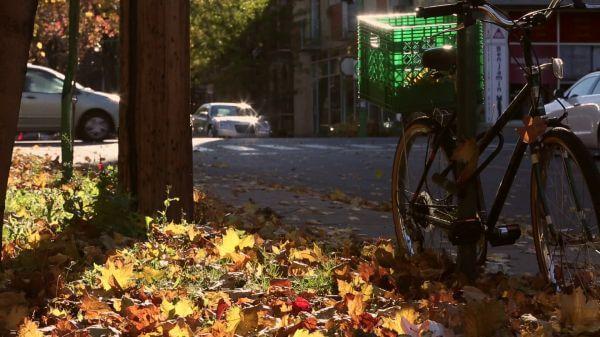 Peacefull Bike Scene with Traffic video