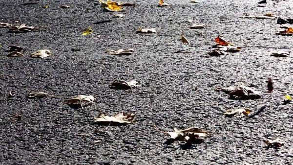 Blown Leaves on Asphalt video